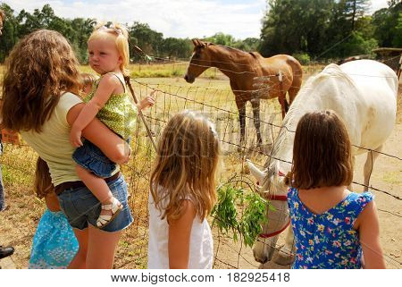 Group of children feeding horses on a ranch