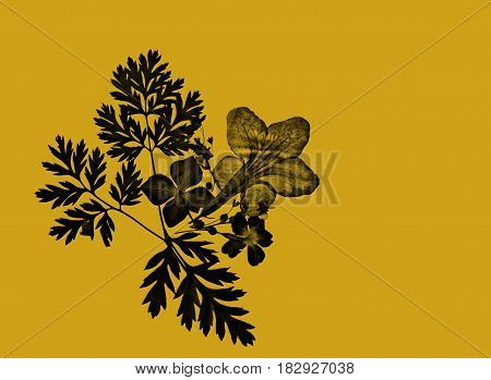 Ochre beige beautiful natural background card with black floral motive decoration and empty space