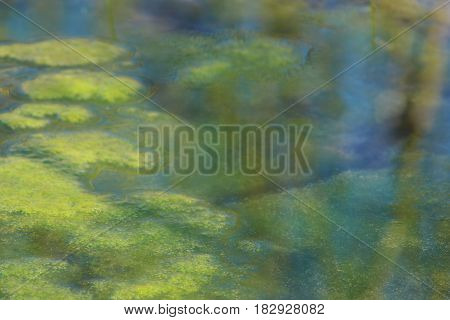 Abstract close up of bright green algae growing in bright blue water.