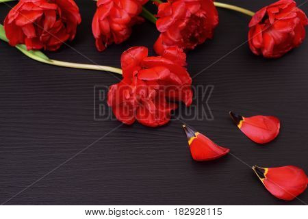 Red tulips with fallen petals on a black surface close up