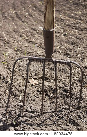 Iron livestock pitchfork on the plowed earth outdoors