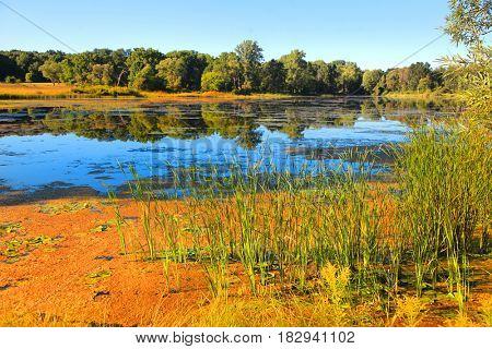 Lake and marsh lands in rural Michigan