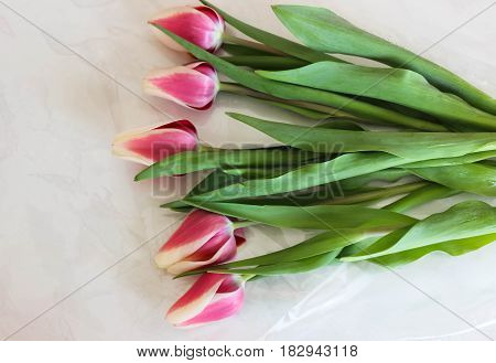 Beautiful spring tulips for a good mood
