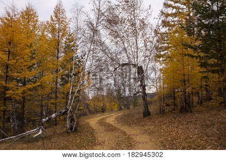 Golden autumn path in forest. Overhanging branches form a tunnel of gold and yellow.