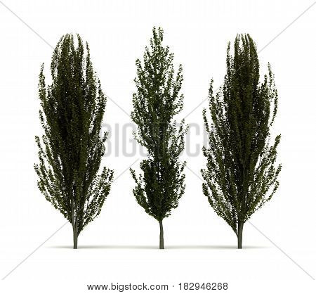 Beech Trees (isolated on white)  3D Rendering