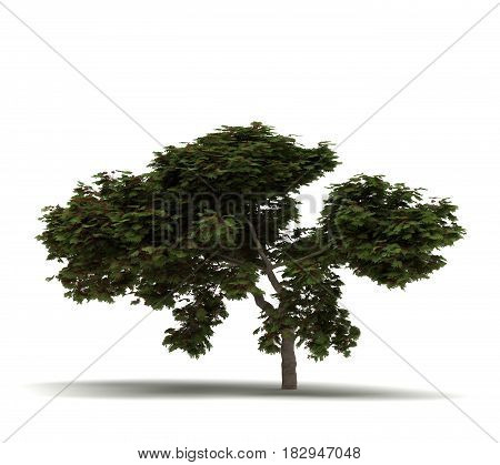 Single Flame Tree (isolated on white)  3D Rendering