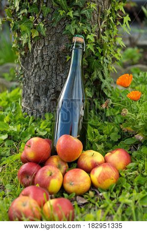 a bottle of normandy cider with apples in the grass