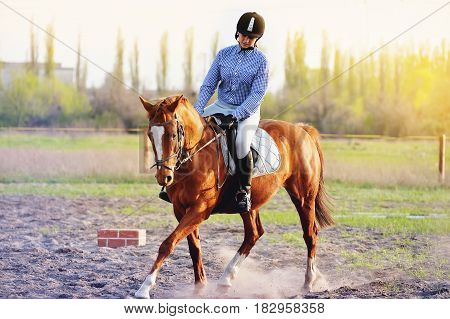 A young jockey girl jumping on a brown horse in a summer field. The girl is engaged in equestrian sport. Girl jockey preparing for competitions in equestrian sport.