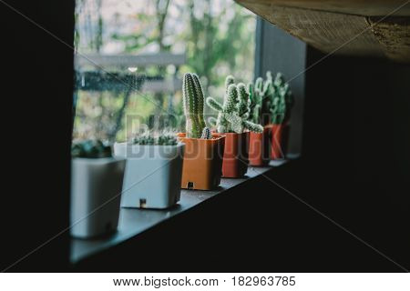 A cactus in plastic pot nearby window