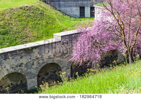 Flowering Tree And Bastion Walls In Urban Park