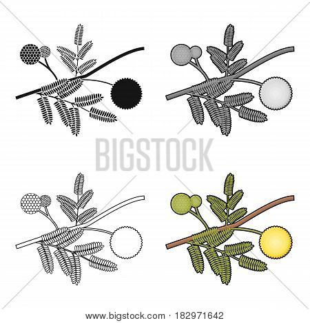 Yellow mimosa flower icon in cartoon design isolated on white background. Australia symbol stock vector illustration.