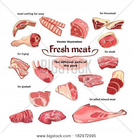 Natural cutting pork meat parts set for various dishes and meals cooking in sketch style isolated vector illustration