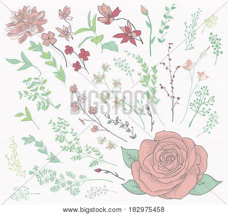 Colorful Hand Drawn Herbs, Plants and Flowers, Branches, Florals. Lush Greenery. Vector Illustration