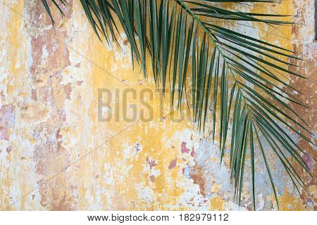 Green palm branch on a old cracked vintage orange wall as tourism travel antique ancient exotic history background