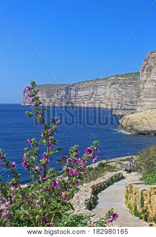 Cliffs of Xlendi Gozo Republic of Maltavertical sight pink flowers in foreground