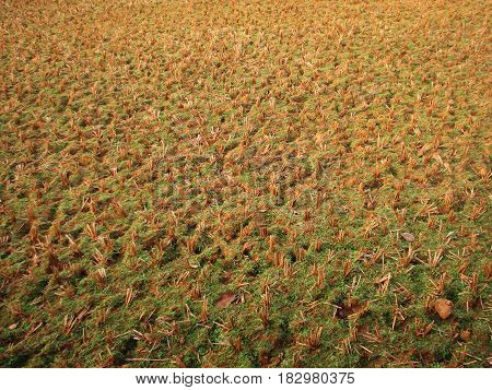 Drought In Indian Rice Plantation Photo