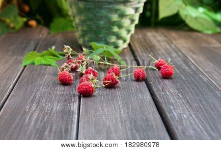 Raspberries closeup on wooden table outdoors at raspberry bush with green leaves background. Summer harvest of berries