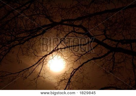 Moon Between Trees