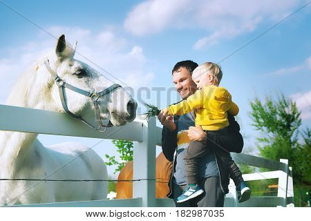 Father And Son Are Feed A Horse At Countryside.