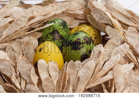 Colorful Easter eggs in branches like in a nest