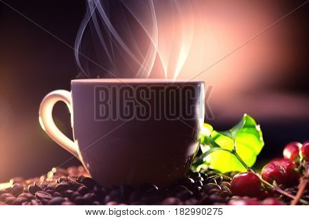 Coffee. Cup of steaming coffee with the real coffee ripe berries, flowers and leaves on a branch of coffee tree over wooden background, silhouette.