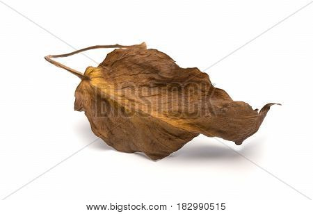 a faded leaf on a white background