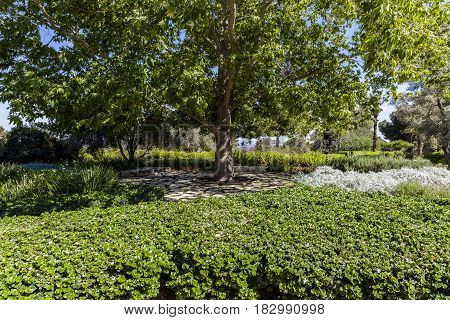 Big lush tree in the green park surrounded with uneven stones pavement and vegetation