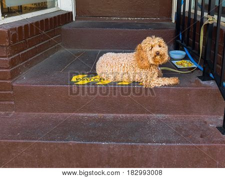 A dog sits on a stairwell by an omelet and water breakfast