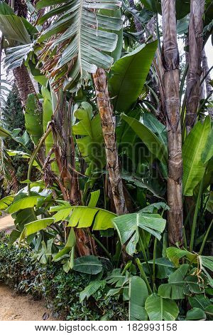banana green trees in park, summer nature