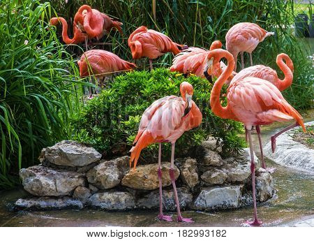 pink flamingo family in Lisbon zoo, Portugal