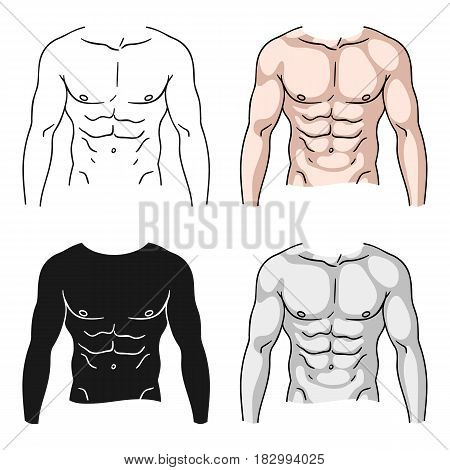 Muscular torso icon in cartoon style isolated on white background. Sport and fitness symbol vector illustration.