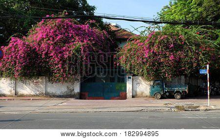 Bougainvillea Flowers Trellis
