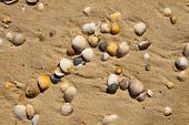 Detail of Small seashells over the sand poster