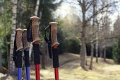 Closeup of Nordic walking poles, on forest trails background poster