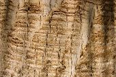 Bark of an old tree as background poster