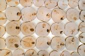 Pattern from many decorative interior unpolished alder wooden saw cuts with knots on white background. poster