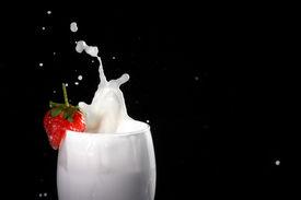 Splash Milk