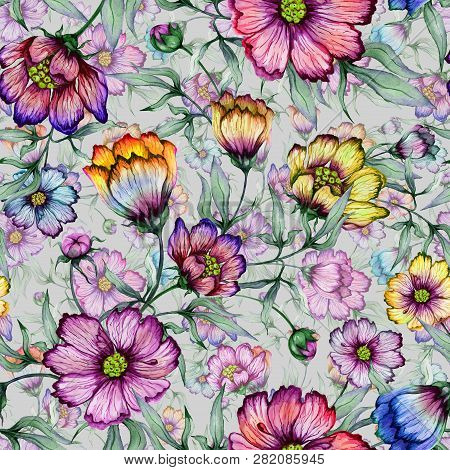 Beautiful Colorful Cosmos Flowers With Leaves On Gray Background. Seamless Floral Pattern.  Watercol