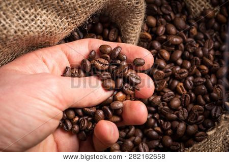 Men Hand Takes The Coffee Beans For Quality Control.