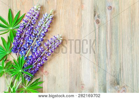 Lupine spring flowers on the wooden background. Selective focus at the lupine flowers. Spring background with free space for text