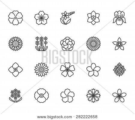 Flowers Flat Line Icons. Beautiful Garden Plants - Sunflower, Poppy, Cherry Flower, Lavender, Gerber