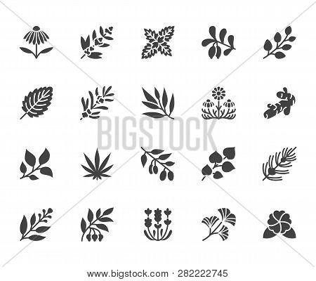 Medical Herbs Flat Glyph Icons. Medicinal Plants Echinacea, Melissa, Eucalyptus, Goji Berry, Basil,