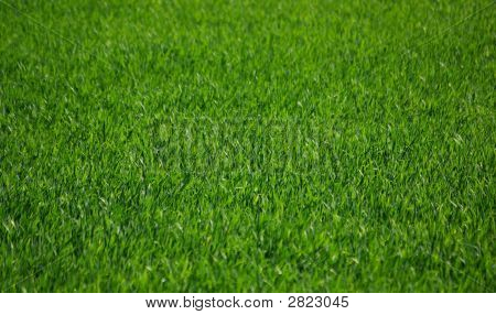 Green Grass Field.