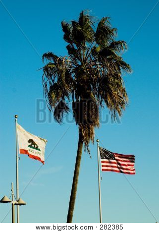 Flags And Palms