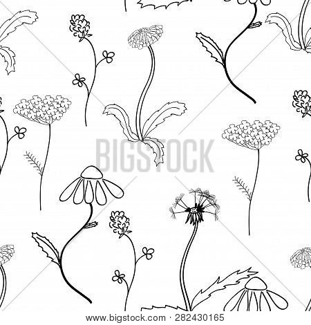 Seamles Pattern With Black And White Meadow Flower On White Background. Good Design For Textile, Wra