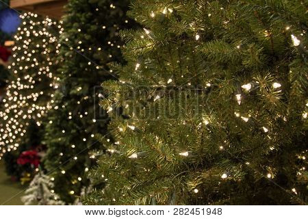 Picking Out The Perfect Christmas Tree. Row Of Illuminated Artificial Christmas Trees For Sale.