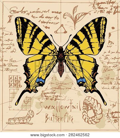 Vector Banner With Drawing Of A Swallowtail Butterfly And It Larva On The Background Of Old Manuscri