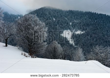 Winter Dawn In Countryside. Cold Weather In Mountains. Trees In Hoarfrost On The Snowy Slope. Cloudy