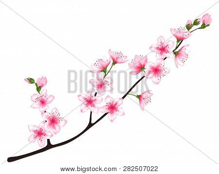 Spring Bloom Tree Branch With Pink Flowers, Buds Vector Illustration. Realistic Design Isolated On W