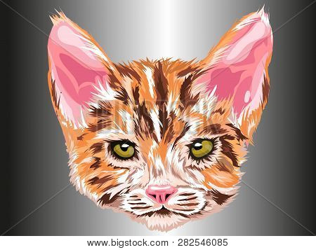 Cat Retreat Looking Forward With Green Eyes In Orange, White And Brown With Gray Background Type Art